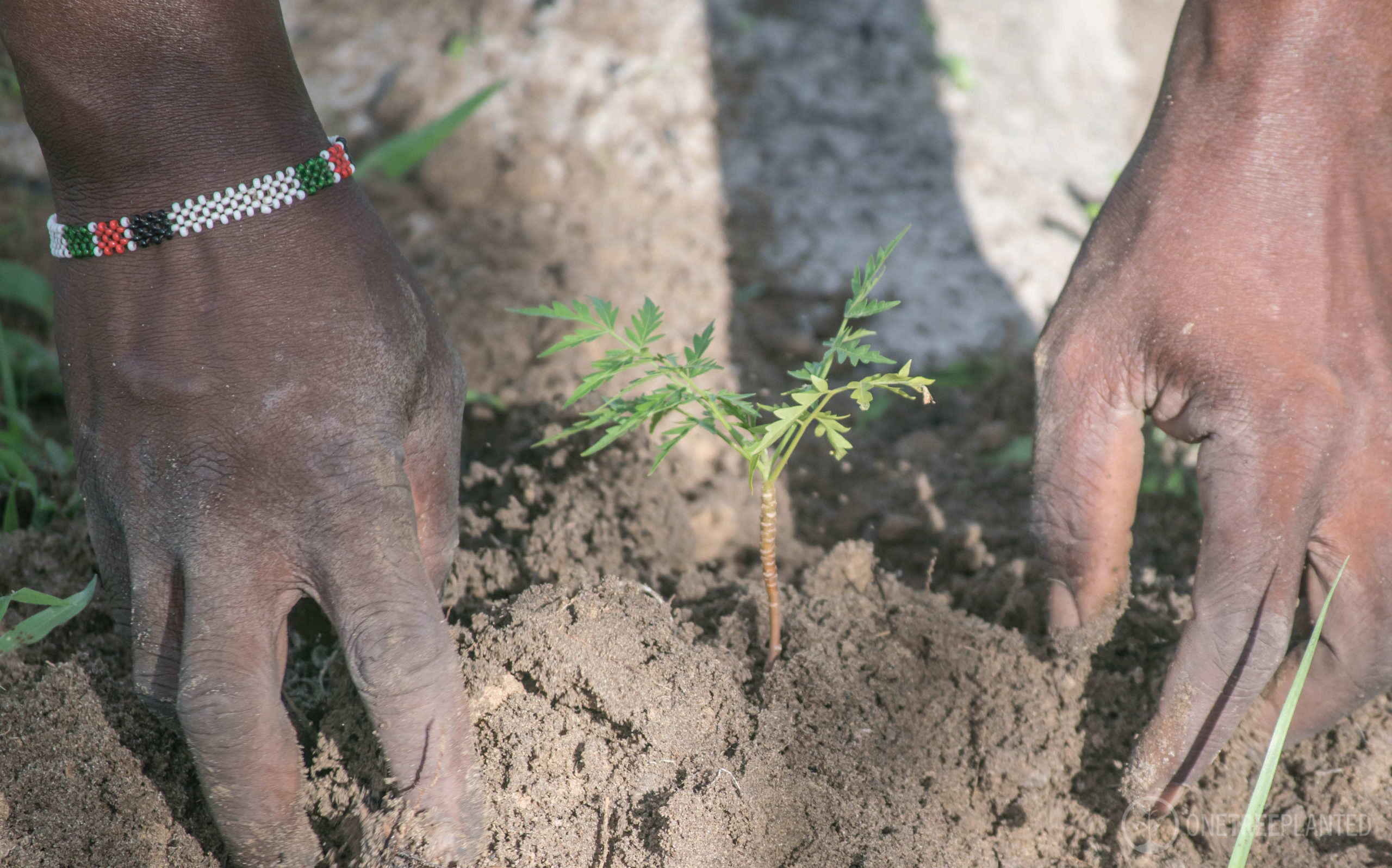 One Tree Per Sale – Reforestation With One Tree Planted