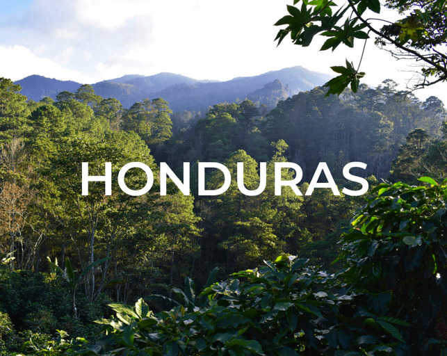 Reforestation with Yogacycled – Honduras