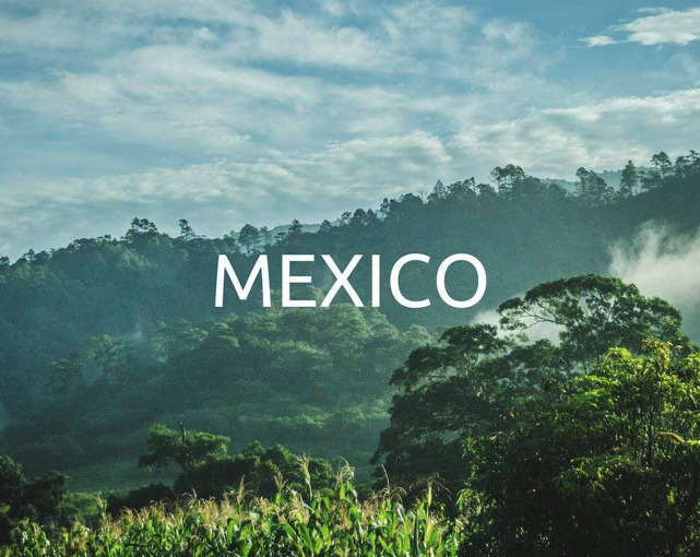 Reforestation with Yogacycled – Mexico